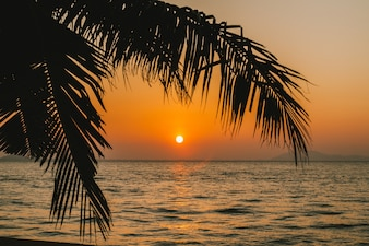 Kokos palm met zonsopgang over de zee