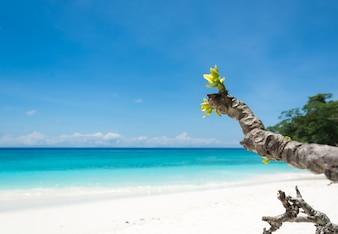 Landschap van het paradijselijke eiland