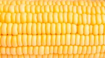 Macro-schot van maïs die gebruikt wordt voor ethanol vult het frame