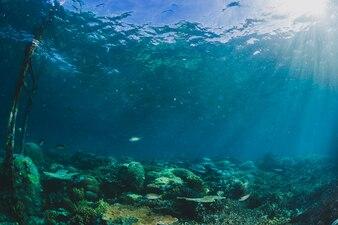 Mooi landschap in onderwater