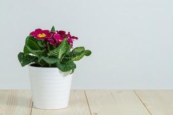 Mooie pot met paarse bloemen
