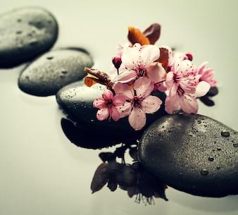 Mooie roze Spa Bloemen op Spa Hot Stones op Water Natte Achtergrond. Zijcompositie. Copy Space. Spa Concept. Donkere Achtergrond.