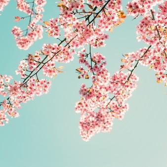 Natuur achtergrond van mooie sakura roze bloem in de lente - vintage pastel kleuren filter