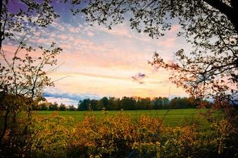 Natuur landschap in de zomer.