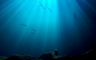 Onderwater, dieren
