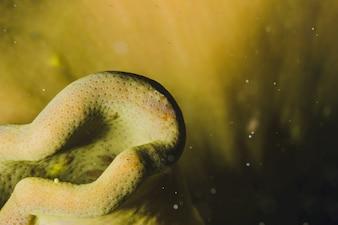 Onderwater scène met een gele overheersing
