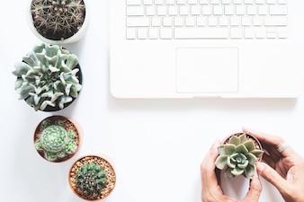 Overhead oog van laptop computer op wit bureau met cactus en succulente en vrouwelijke hand die een houdt
