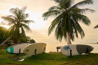 Palmbomen boom toerisme zonsondergang mooie