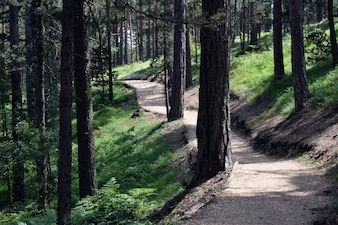 Prachtig pad om te wandelen en joggen in het bos