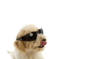 Puppy hond in het glas op een witte achtergrond