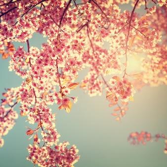 Retro natuur achtergrond van mooie kersenroze bloem in de lente