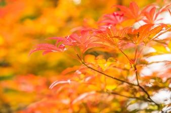 Rode bladeren, herfst