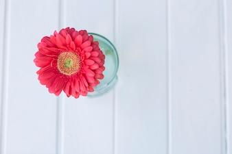 Roze bloem met wit oppervlak achtergrond