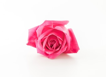 Roze roos