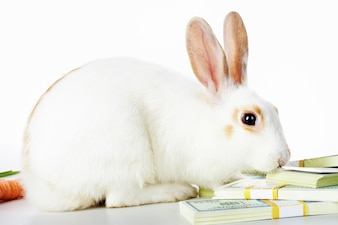Schepsel natuur bankbiljet dollar fur