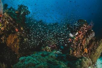 Shoal van tropische vis in hun ecosysteem