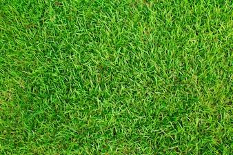 Textuur grasveld