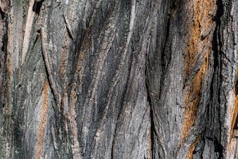 Textuur van de schors van een boom