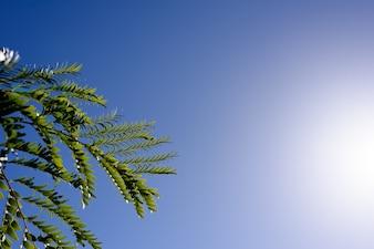 Verse groene boom en blauwe lucht