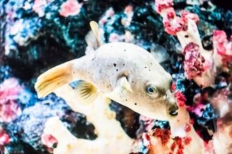 Vis in het water