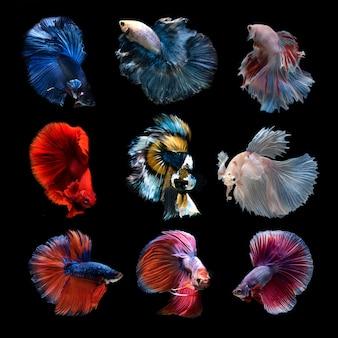 Vissen op een zwarte achtergrond