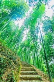 Vitaliteit klimaat groei gras schoonheid