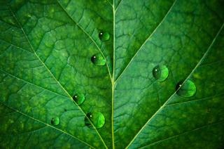 Waterdruppels vectoren foto 39 s en psd bestanden gratis download - Wallpaper amandelgroene ...