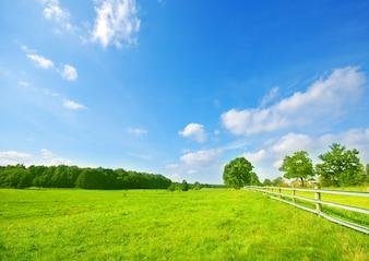 Weide met bomen en een houten hek