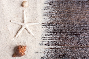 Zeeschelpen met zand als achtergrond en copyspace, zomerconcept