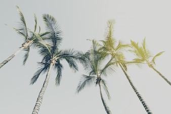Zomerreizen Vakantieconcept. Mooie Palmen Op Blauwe Hemelachtergrond. Toning.