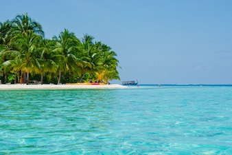 Zon dag kokospalm caribbean