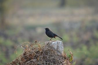 Zwarte vogel op een houten stam