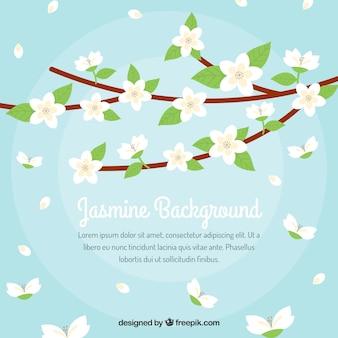 Achtergrond van takken met jasmijn