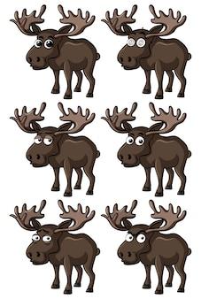 Amerikaanse elanden met verschillende gezichtsuitdrukkingen