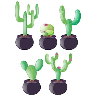 Cactus ontwerpt collectie