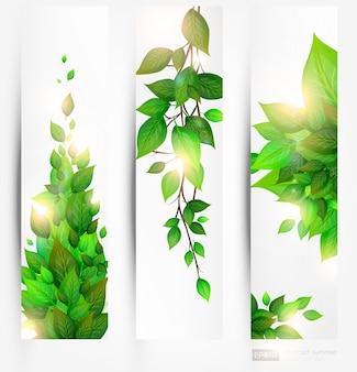 Clean bladsamenvatting dagplant