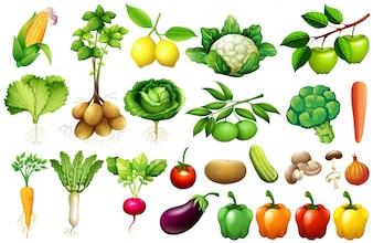 Diverse soorten groenten illustratie