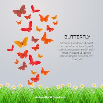 Gras achtergrond met oranje vlinders vliegen