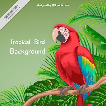 Hand geschilderde papegaai en palmbladeren achtergrond