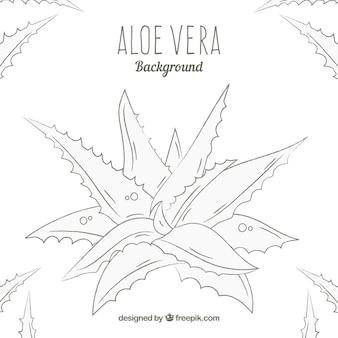 Hand getekende Aloe Vera achtergrond