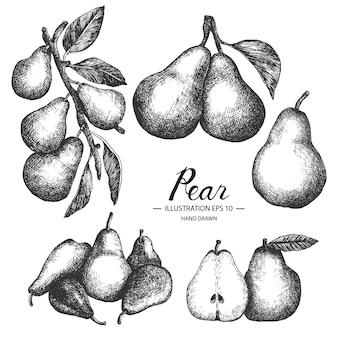 Hand getekende peren collectie