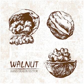 Hand getrokken walnoten ontwerp