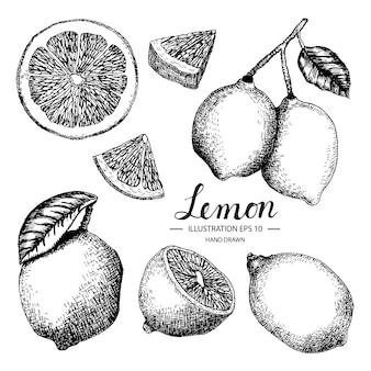 Met de hand getrokken citroen collectie