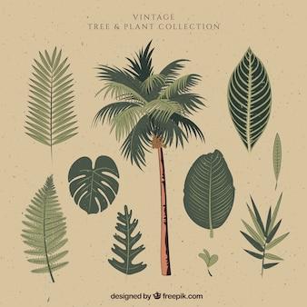 Palm met de hand getekende bladeren