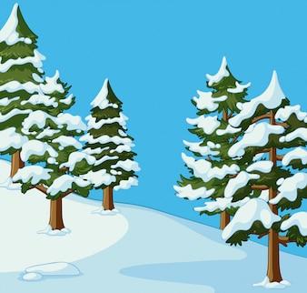 Pine bomen bedekt met sneeuw