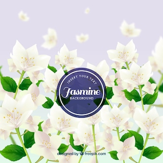 Realistische achtergrond van jasmijn