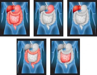 Röntgenfilms van menselijke organen illustratie