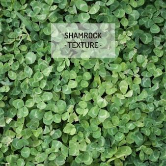 Shamrock textuur