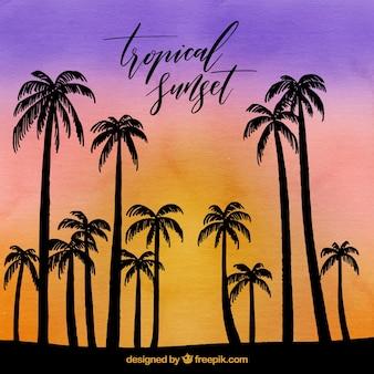 Tropische achtergrond met palmen met tegenlicht