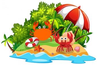 Twee krabben op het eiland
